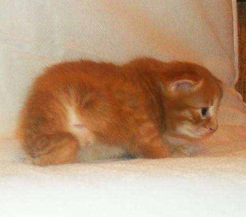 4 эффективных способа определения пола котенка