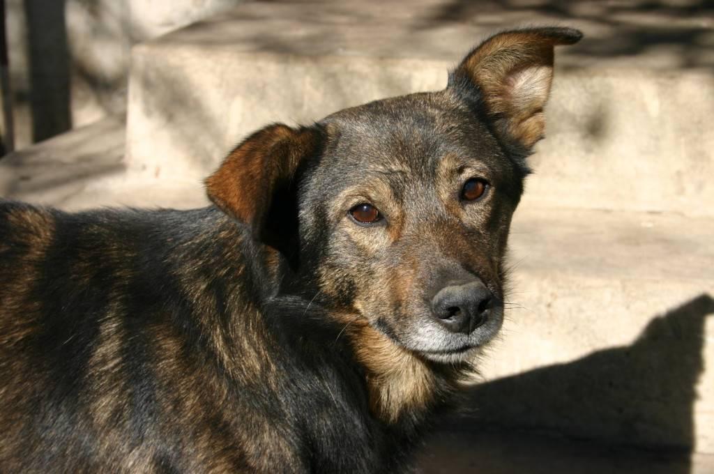 Продолжительность жизни шарпеев: сколько лет живут эти собаки в домашних условиях и как можно продлить этот срок