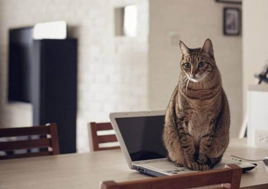 Куда деть кота на время отпуска