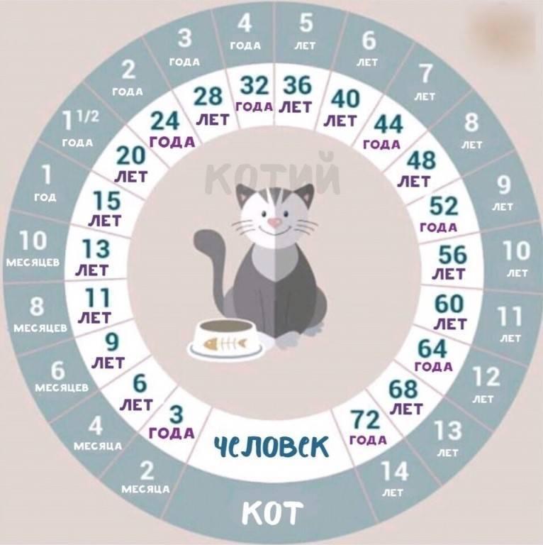 Возраст кошки по человеческим меркам, описание методики расчета, видео