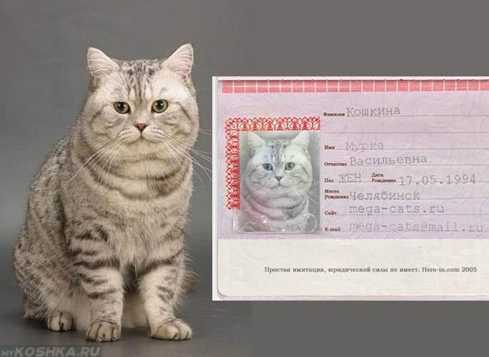 Чип для кошек.