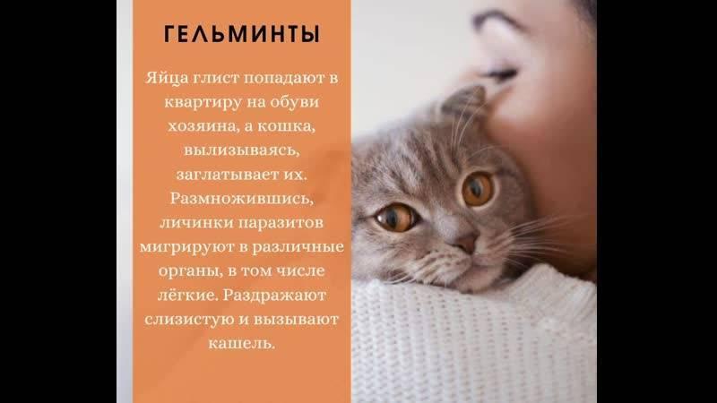 Кошка чихает и кашляет - чем лечить и как