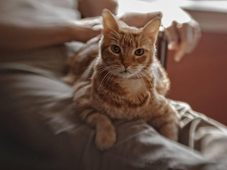 Почему кошки топчут нас, людей, лапками и мурчат, кот топчет хозяина и любого человека лапами, иногда с когтями, что думают учёные?