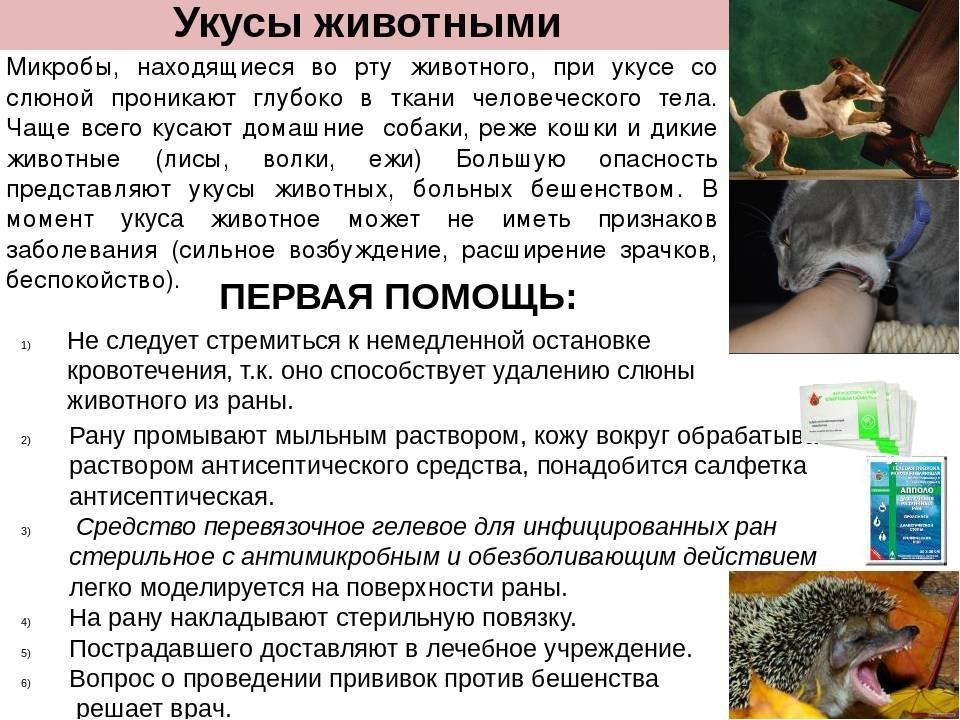 Укусы кошек: чем опасны и как лечить