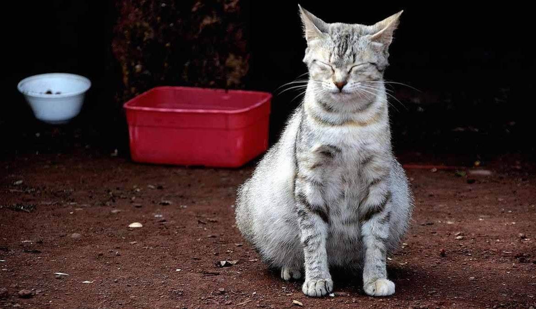 Почему появляется горб на спине у кота