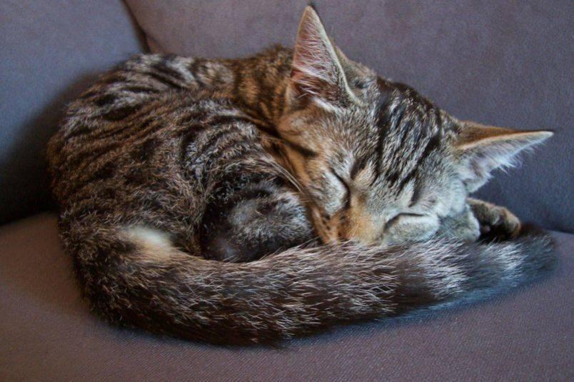 Сколько спит кошка в сутки и можно ли ей столько спать?