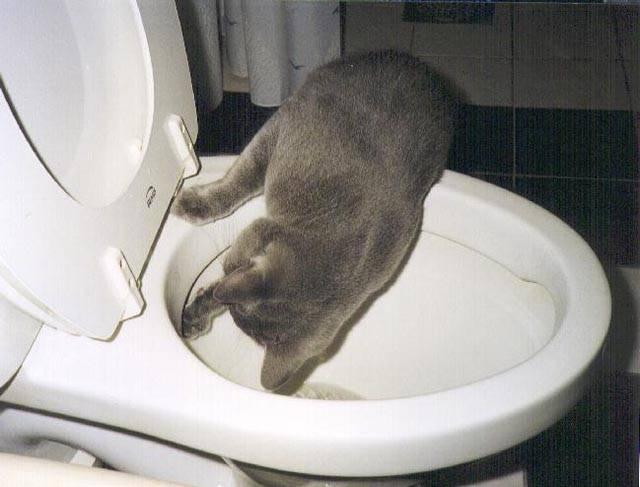 Почему котенок не какает и что делать в такой ситуации?