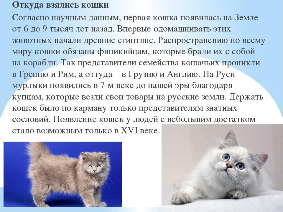 Откуда и когда появились кошки, от кого произошли