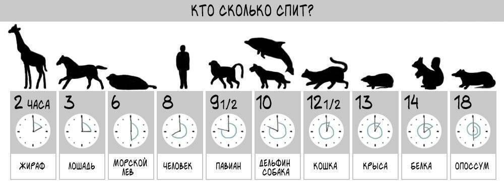 Сколько должны спать в сутки котенок и взрослая кошка