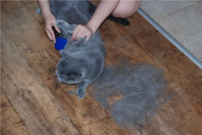 Линька у кошек: причины, длительность, как уменьшить количество шерсти