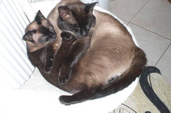 Как и чем кормить кошку или кота: 4 совета которые нельзя игнорировать