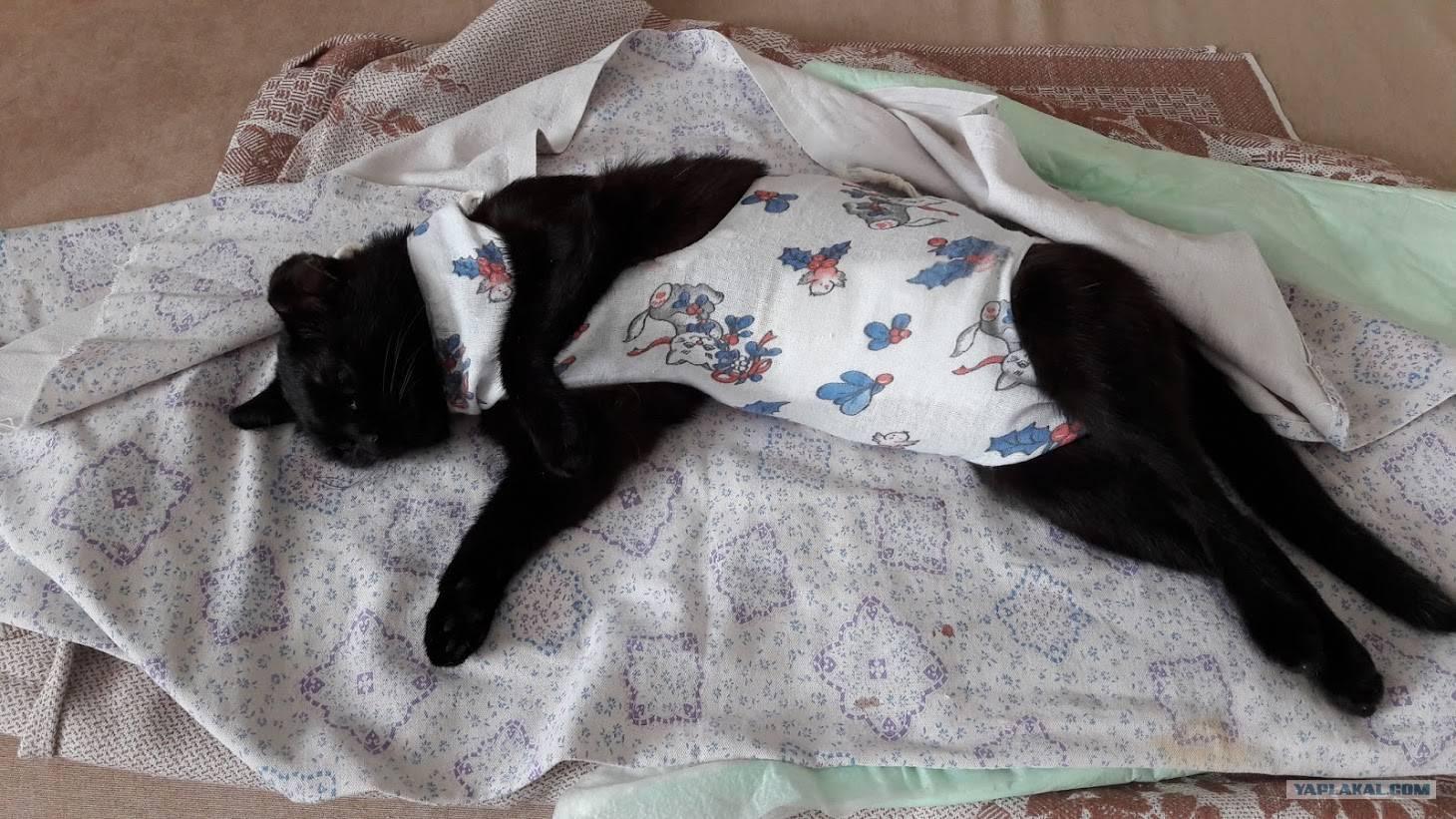 Поведение кошки после стерилизации: в первые часы и дни