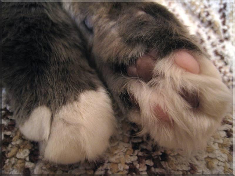 Подрезание когтей у кошек: способы и альтернативы