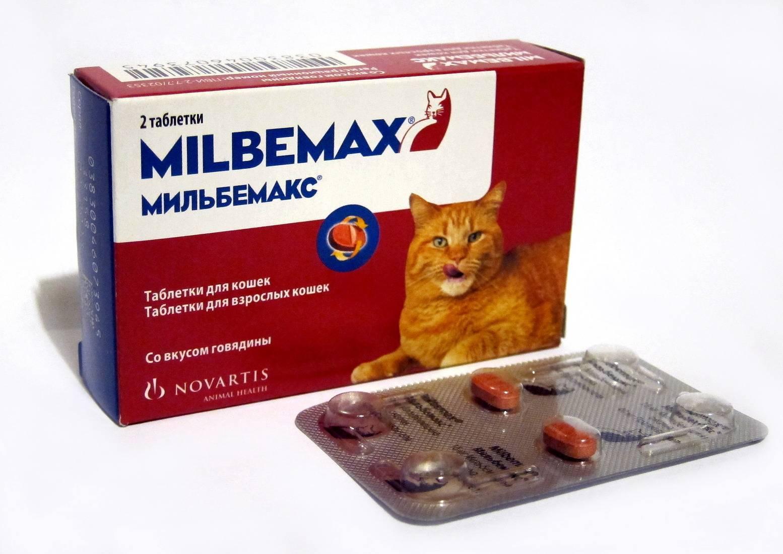 Таблетки от глистов для кошек: виды, дозировка, как часто давать