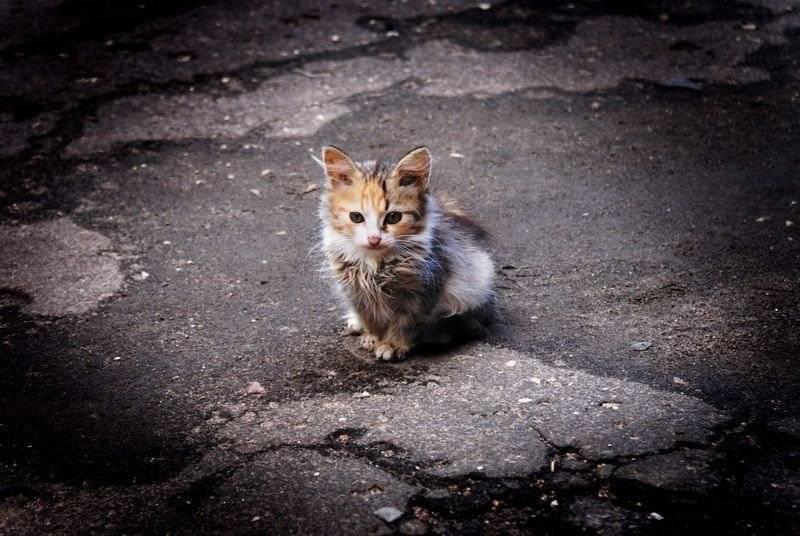 Почему кошка боится всего, пугается, прячется, что делать: причины слишком тревожного состояния кота