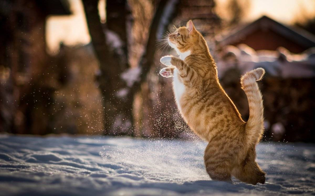 Мерзнут ли кошки зимой на улице — какой мороз выдерживают