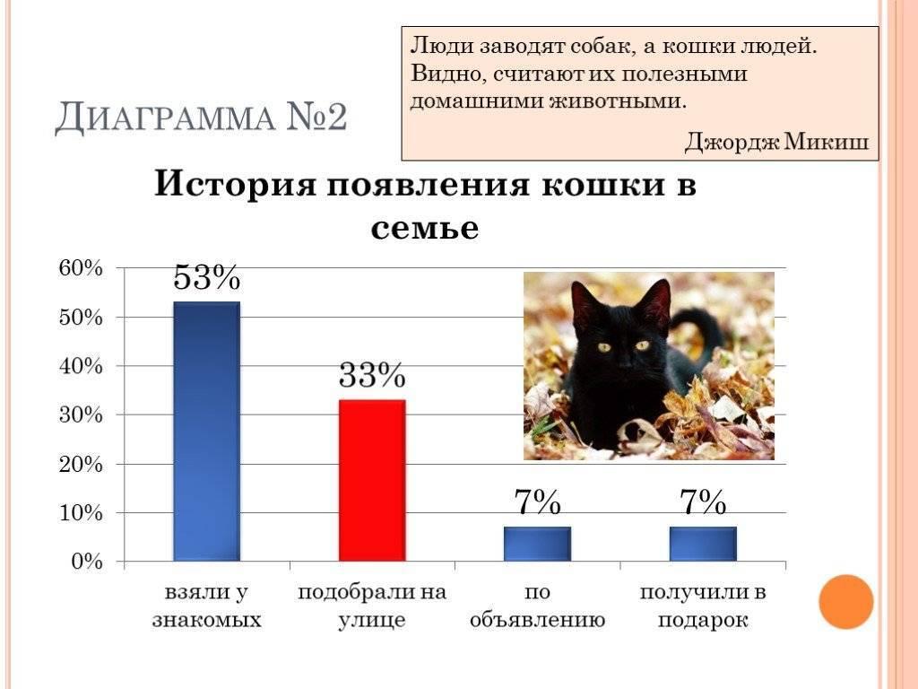Сколько живут коты и что на это влияет