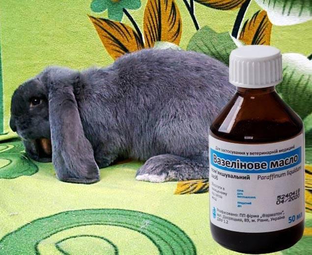 Дозировка вазелинового масла для кота при запоре
