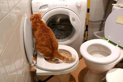 Кот не может сходить в туалет: причины и способы лечения