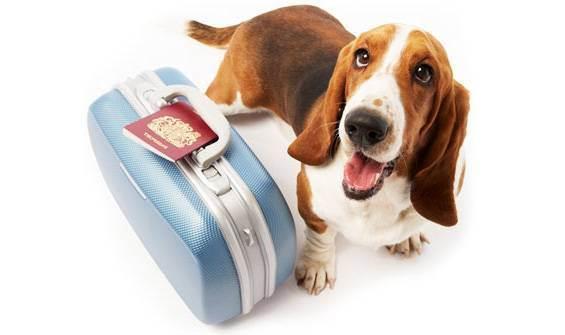 Правила вывоза животных за границу