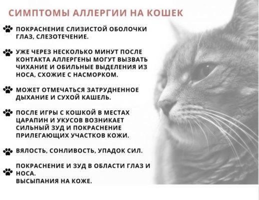 Аллергия на кошек у детей: причины, симптомы и лечение