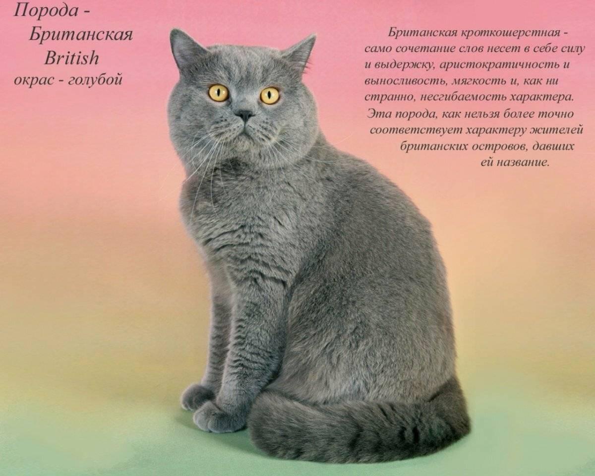 Необычные породы кошек: 10 самых удивительных, странных и интересных домашних котиков