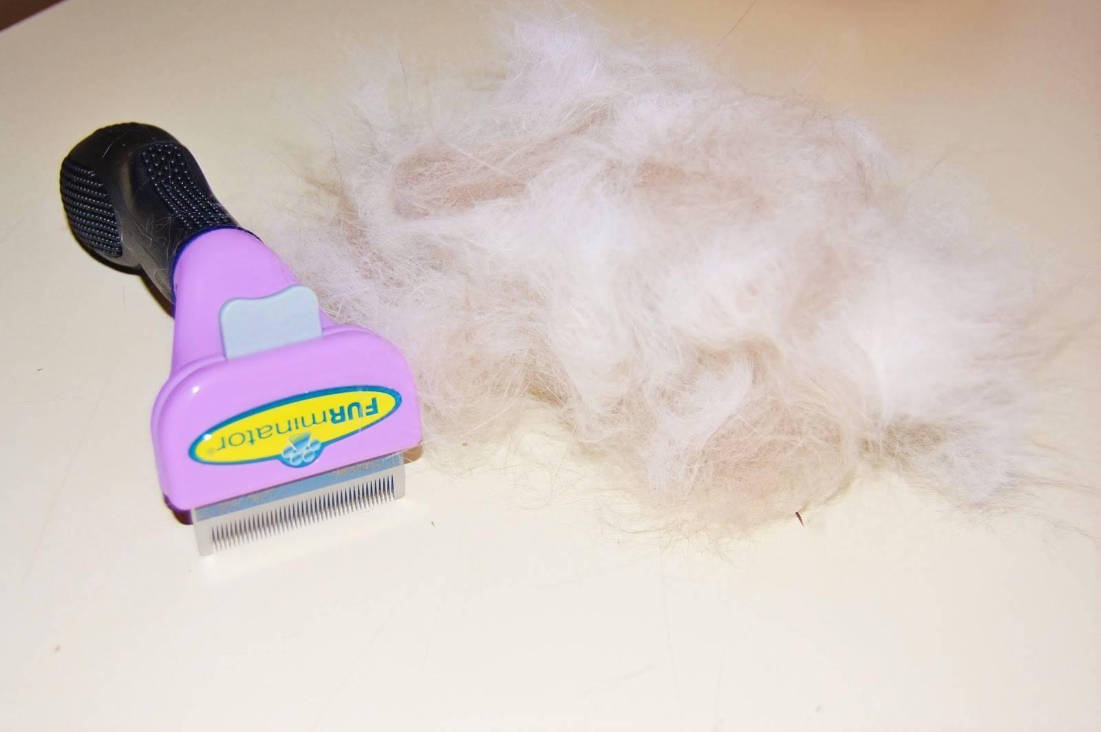 Чем вычесывать кошку чтобы не было шерсти в доме: во время линьки, короткошерстную, пуходерка,