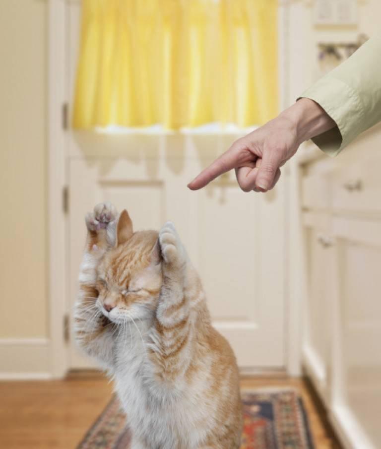 Как отучить котенка лазить по столам: практические способы воспитания