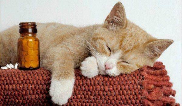 Что делать если отравился котёнок