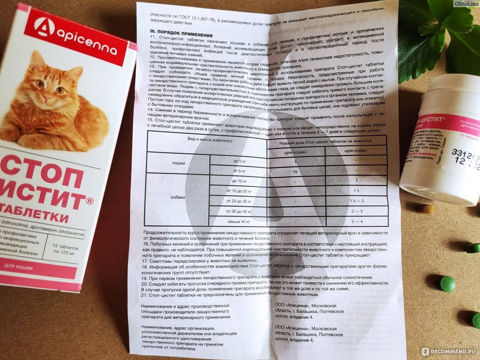 ᐉ способ применения стоп цистит для кошек - zmclinic.ru