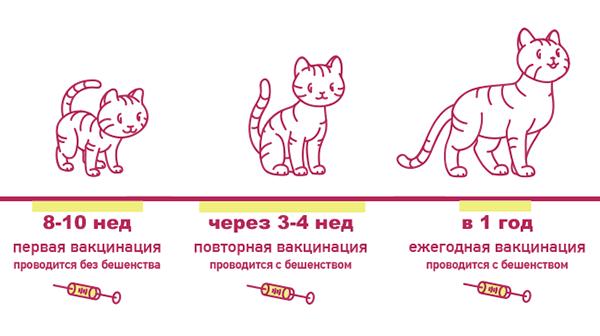 Прививка котенку в 3 месяца