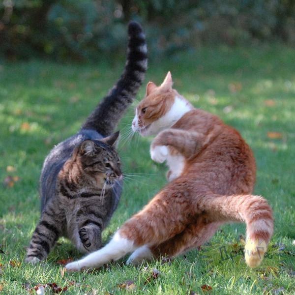 О агрессивных кошках и котах
