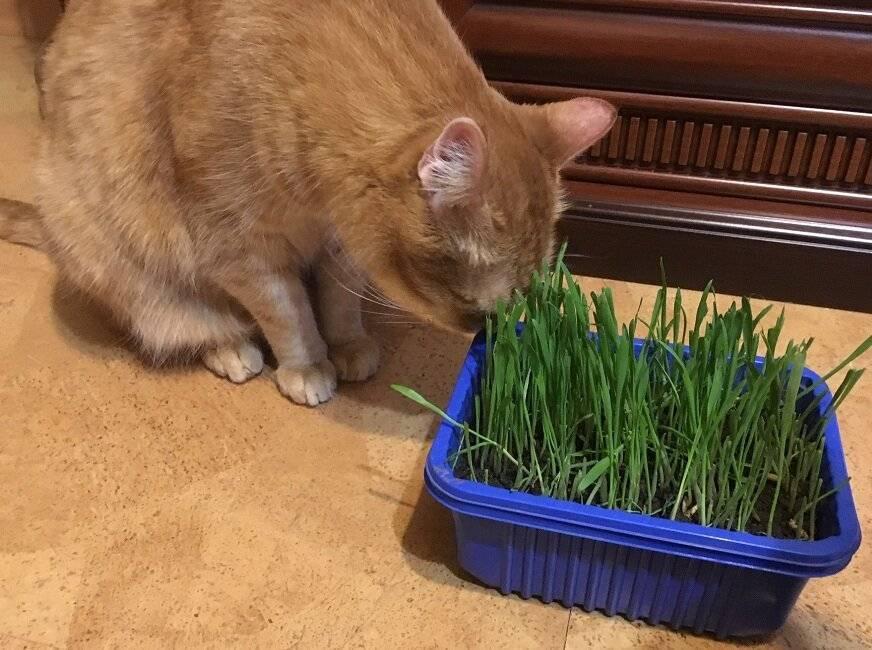 Как защитить комнатные растения от кошек, а кошек от них