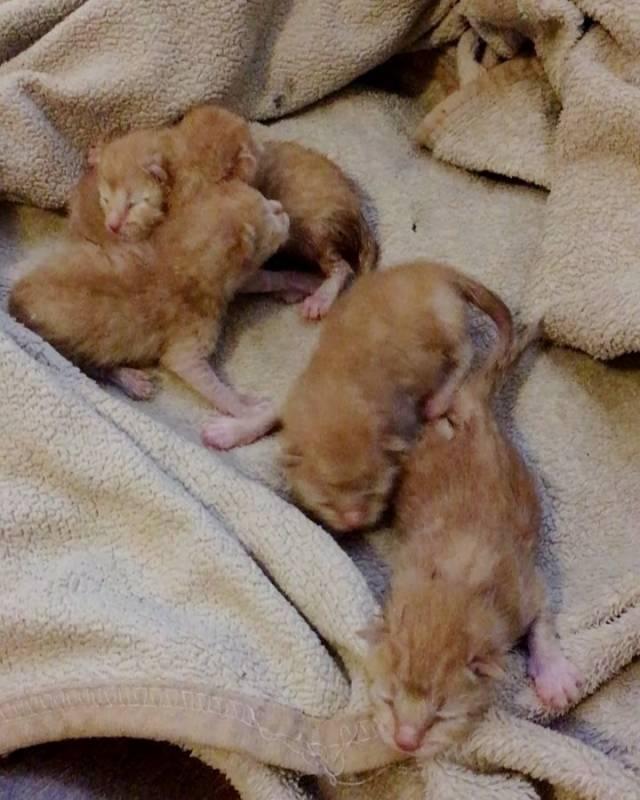 Когда котята открывают глаза, через сколько дней после рождения они начинают видеть?