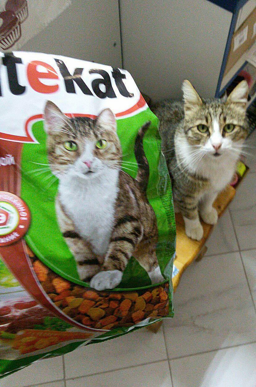 Пивные дрожжи для кошек: состав и дозировка