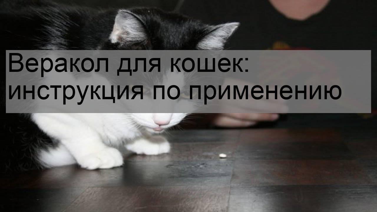 Веракол для кошек и собак: инструкция по применению