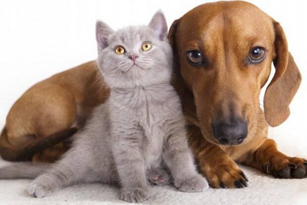 Кого выбрать - кошку или собаку? – знали?