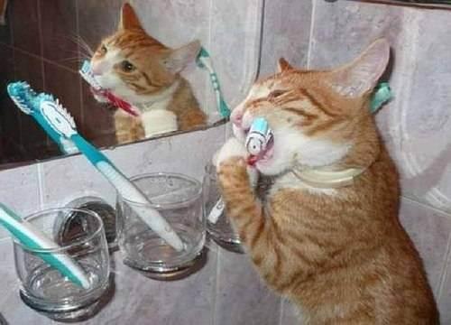 Как чистить зубы кошке — пошаговая инструкция как в домашних условиях чистить кошке клыки и зубы (110 фото)