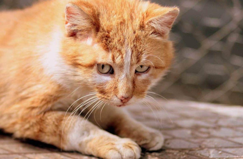 Что делать если кот чихает