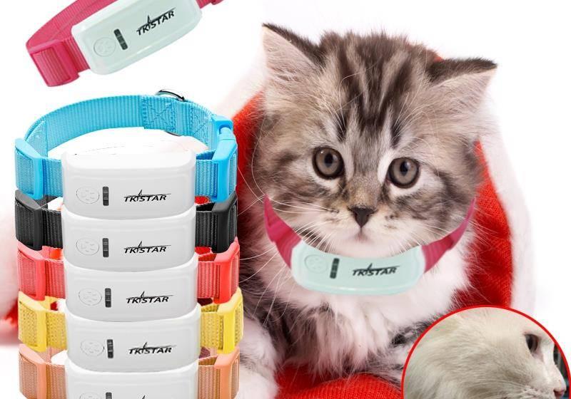 Ошейник для кошки и кота: особенности выбора для взрослого животного или котенка, преимущества и недостатки различных моделей