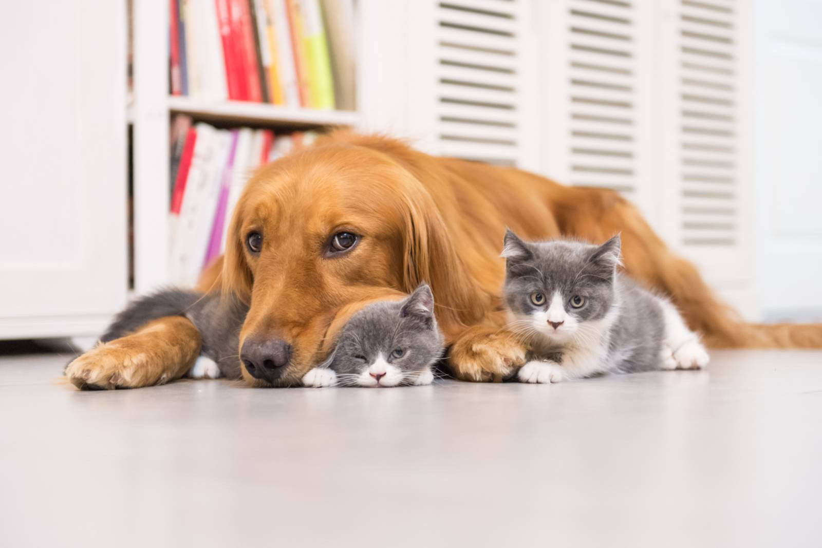 Какую кошку лучше завести в квартире - обзор самых спокойных, неприхотливых и беспроблемных пород