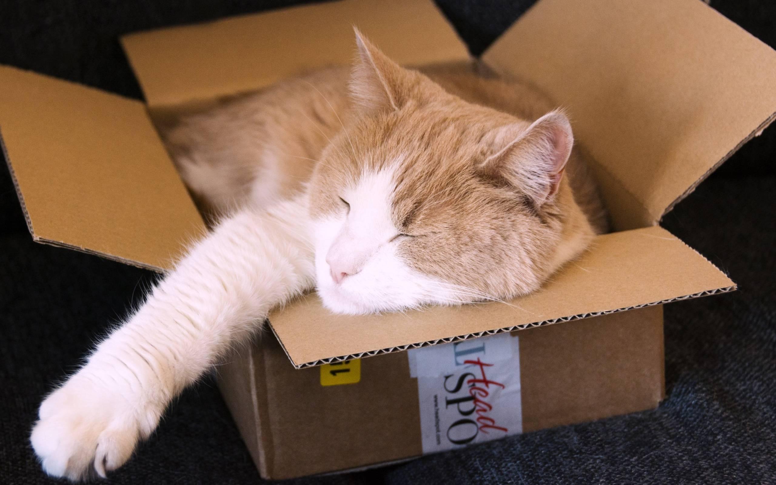 Кот ест и грызет вещи - что делать и нормально ли это?