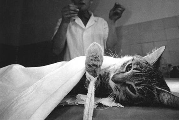На что живут ветеринары