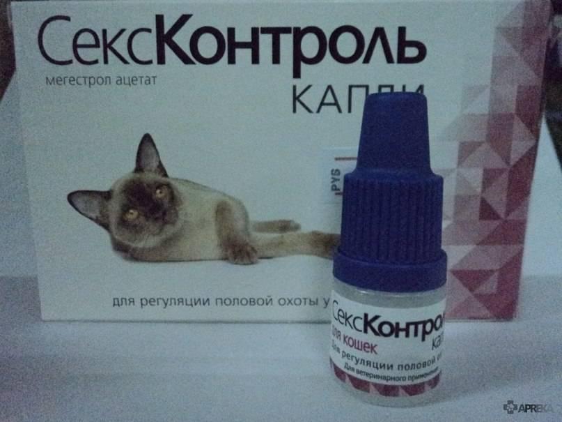Капли для кошек от гуляния — обзор средств и стоит ли их использовать