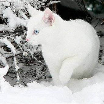 Как понять, что моей кошке холодно?