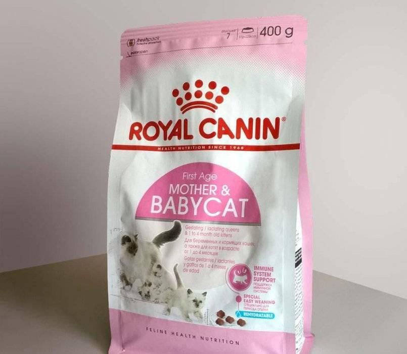 """Состав корма """"Роял Канин"""" для кошек и котят: обзор сухих и влажных продуктов разных линеек"""