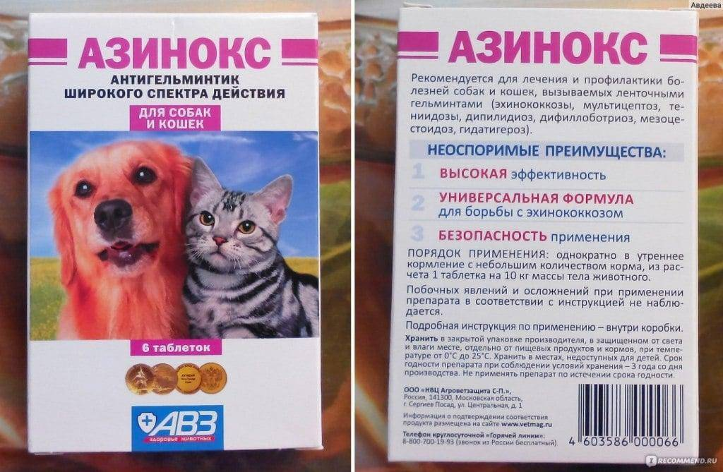 Как правильно глистогонить кошку