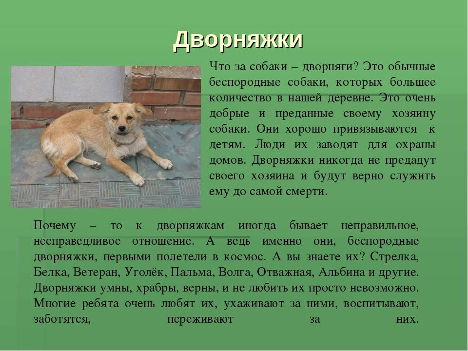 Кто лучше: породистые собаки или дворняги? | dogkind.ru