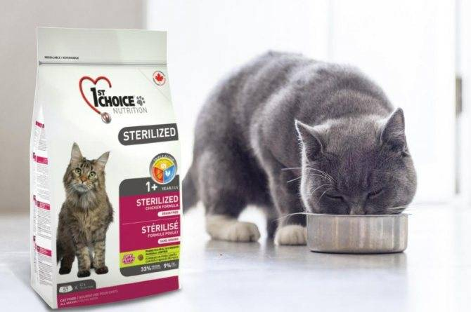 Корма супер премиум класса: список марок кормов для взрослых кошек, котят и кастированных котов