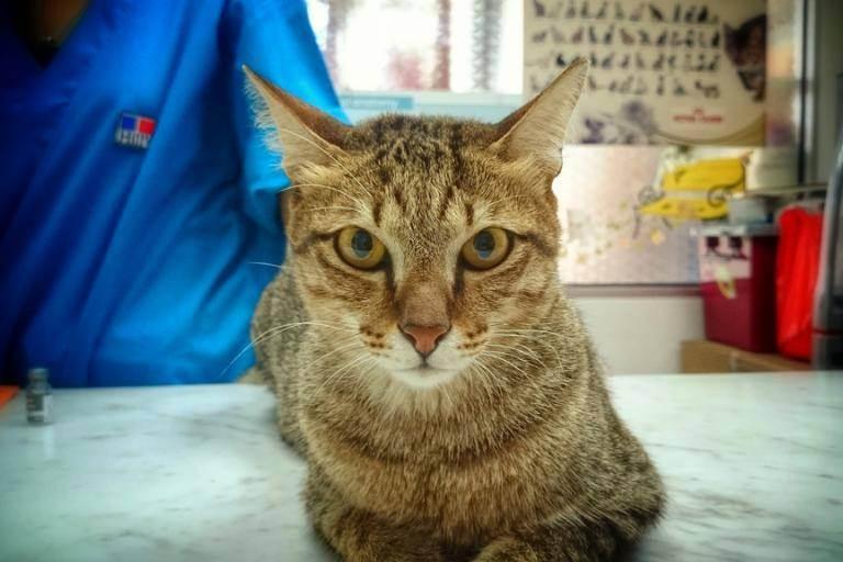 Правила и особенности вакцинации кошек